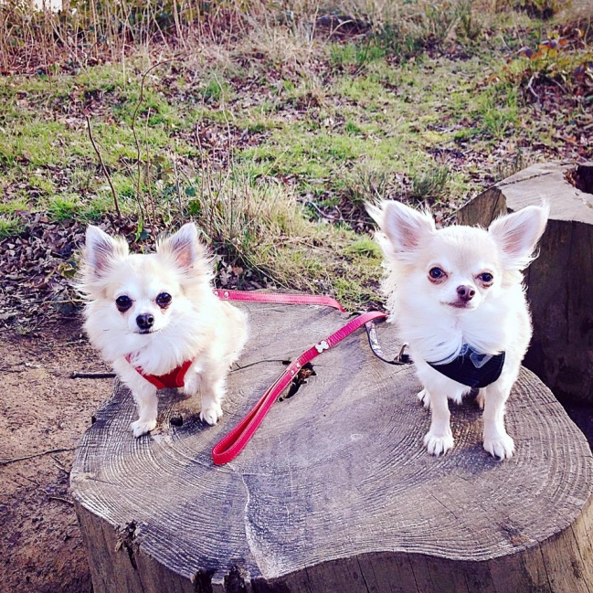 Lily and Alfie posing for a picture mid-walkies at Nostell Priory